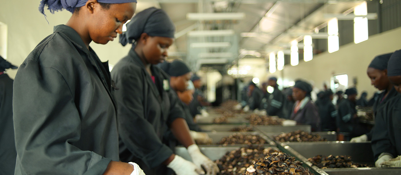 Kenya Nut Company